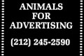 Animals for Advertising